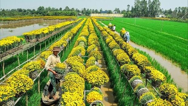 越南同塔省推动旅游与农业价值结合发展 hinh anh 1