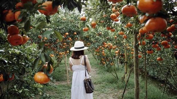 越南同塔省推动旅游与农业价值结合发展 hinh anh 3