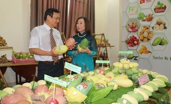 中美贸易摩擦:越南向中国出口活动遇阻 hinh anh 1