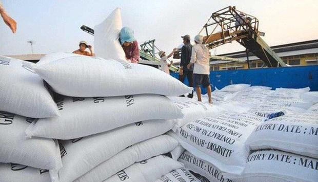 世界大米市场:越南大米价格下降 hinh anh 1