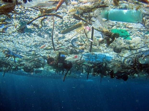 越南制定关于2030年前减少海洋塑料垃圾的国家行动计划 hinh anh 1
