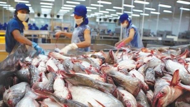 九龙江三角洲地区各省市探讨进一步促进查鱼出口的措施 hinh anh 3