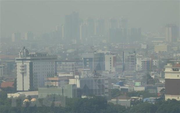东盟共同努力可持续利用泥炭和减少雾霾天气的发生 hinh anh 1
