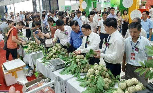 芝陵番荔枝产品推介周在河内开幕 hinh anh 2
