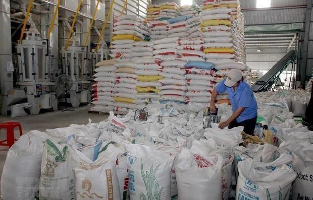 越南42家企业获得大米出口许可证 hinh anh 1
