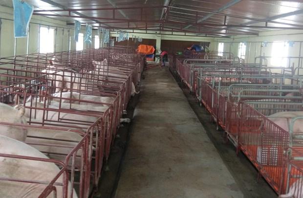 北江省加强疾病预防与控制 实现畜牧业结构重组 hinh anh 1