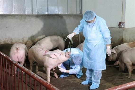 北江省加强疾病预防与控制 实现畜牧业结构重组 hinh anh 2