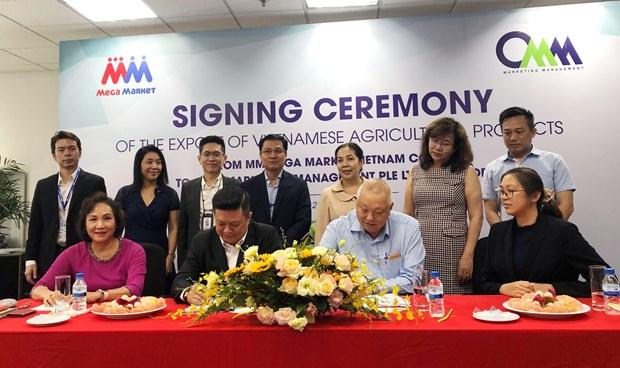 MM Mega Market(越南)公司今年9月向新加坡出口首批农产品 hinh anh 1