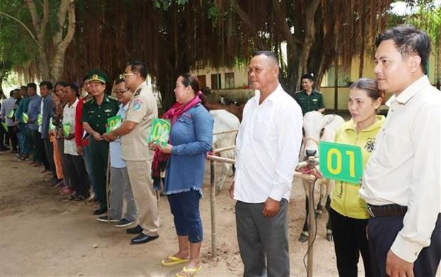 越南边防部队向越柬边境地区贫困户赠送牛苗 hinh anh 1