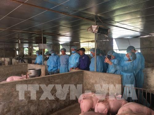 德国愿与首都河内分享有关非洲猪瘟疫情防控经验 hinh anh 1