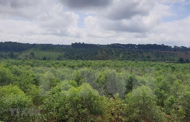 大力加强西原地区护林队伍建设 提升森林保护质量 hinh anh 1