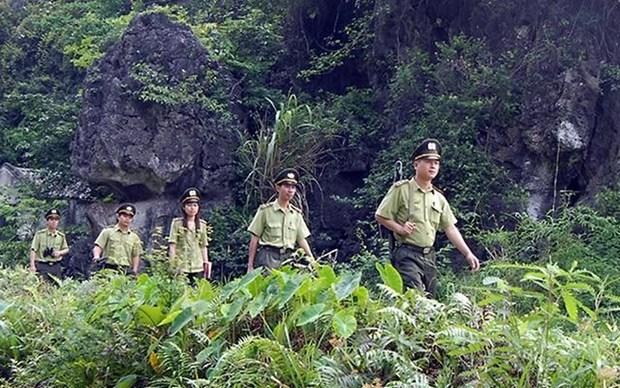 宁平省努力提高森林管理保护工作效果 hinh anh 1