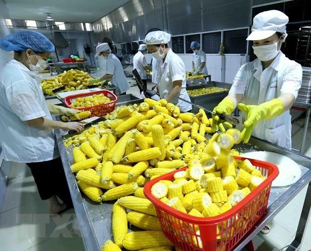 越南加强出口农产品检疫 满足欧盟市场新规定 hinh anh 1