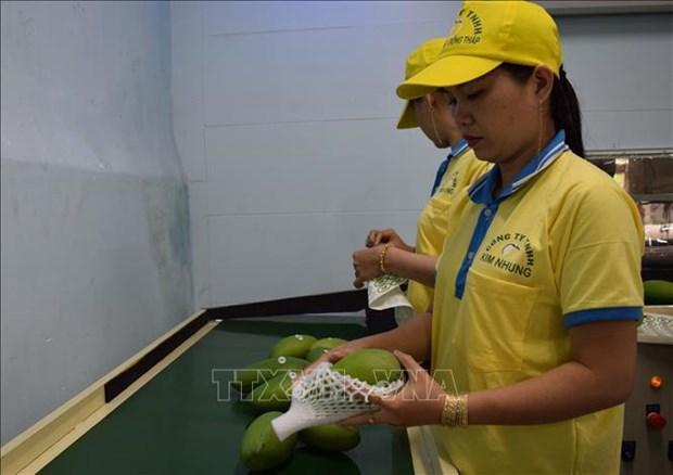 欧盟于9月1日起开始对越南农产品进行严格检查 hinh anh 1