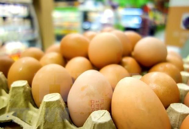 印尼鸡肉价格崩盘 政府却将目标对准鸡蛋 hinh anh 1