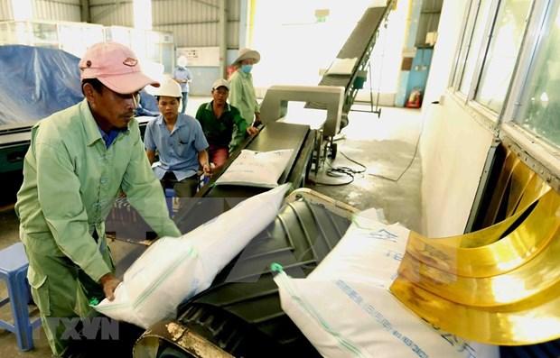 2019年前8月越南大米出口额达20亿美元 hinh anh 1