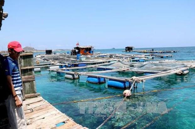 越南积极健全水产资源保护与开发规划 hinh anh 2