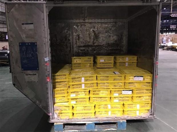 越南首批新鲜龙眼正式抵达澳大利亚 hinh anh 2