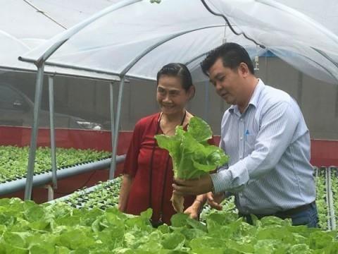胡志明市走向对外出口农作物种子种苗的目标 hinh anh 1