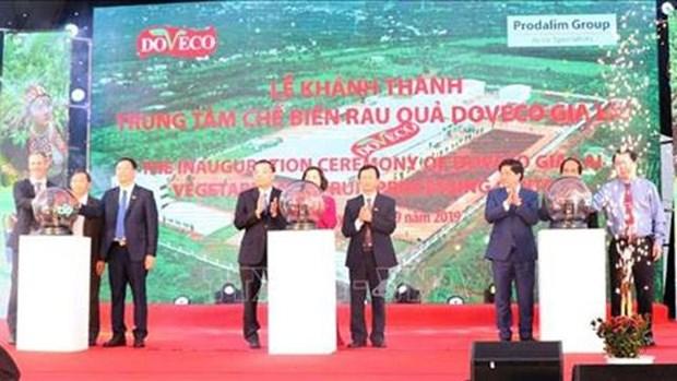 越南西原地区最大蔬菜加工厂正式投入运行 hinh anh 1