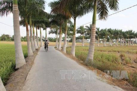 中部以南沿海地区和西原地区新农村达标乡占42%以上 hinh anh 1