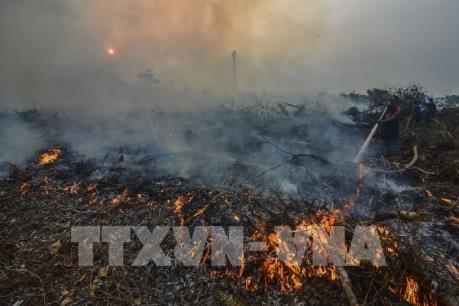 印尼关闭30多家农场 以减少森林火灾发生 hinh anh 1