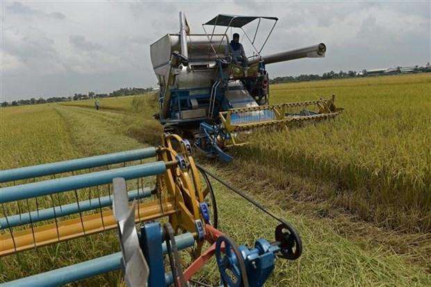 2019年10月起泰国政府开展大米价格保证计划 hinh anh 1