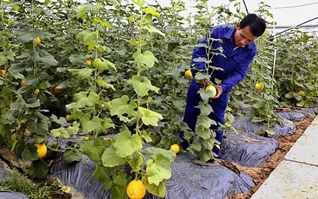 宁平省将开展新农村建设目标计划与可持续扶贫计划相结合 hinh anh 1