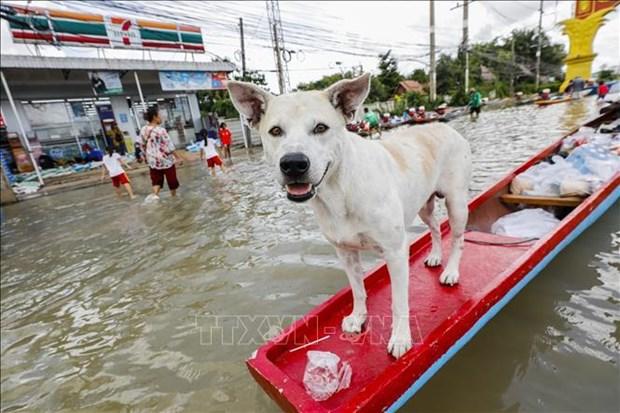 泰国遭遇暴雨洪水袭击导致数万人撤离 hinh anh 2