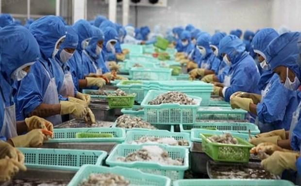 2019年前8月越南虾类出口额达19.3亿美元 hinh anh 1