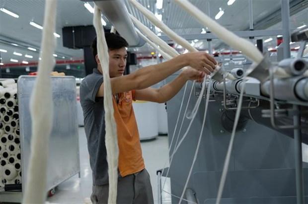 大叻羊毛纱线纺纱厂首次向日本出口天然羊毛纤维 hinh anh 1