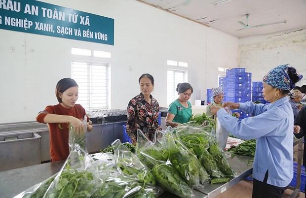 采取措施促进越南农水产品加工业发展 hinh anh 1