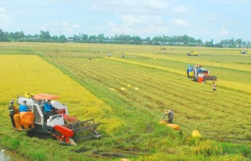 安江省促进稻米销售合作和连接 hinh anh 3