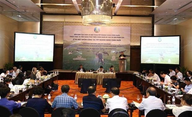 越南奶牛养殖业发展潜力巨大 hinh anh 1