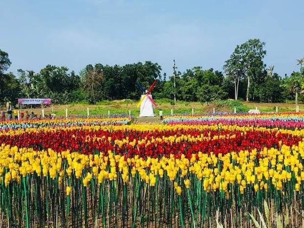 菲律宾:以塑料垃圾制成的郁金香花园 hinh anh 1
