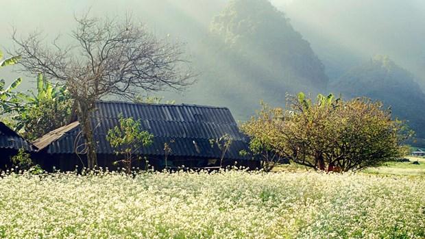 越南北部七个最佳秋季旅行目的地 hinh anh 1
