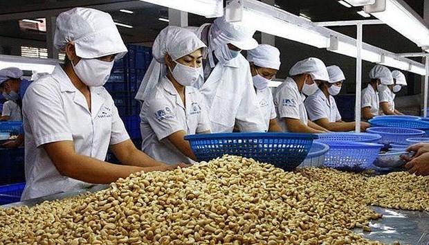 越南对中国的腰果出口量猛增 hinh anh 1