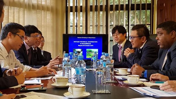 越南与日本企业合作助推莫桑比克经济社会的发展 hinh anh 1