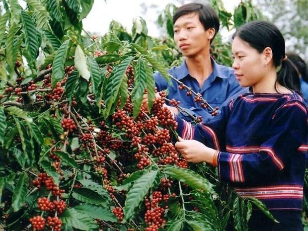 越南得乐省唤醒企业的创业精神 hinh anh 1