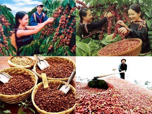 美国媒体高度评价越南咖啡出口的跨越性增长 hinh anh 1
