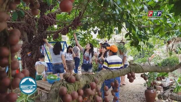 富安省把榔色果园打造成为可持续发展旅游产品 hinh anh 1