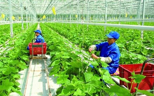 广义省批准43个农业投资项目 hinh anh 1