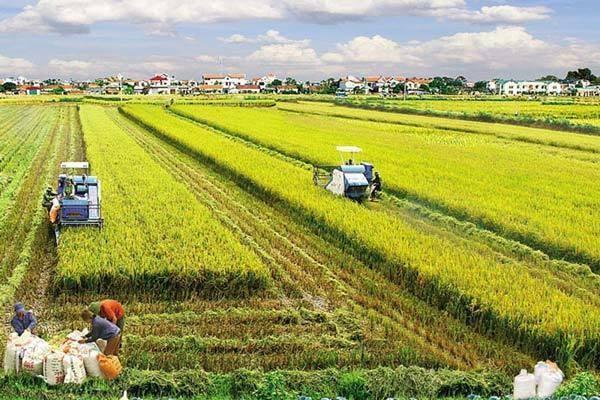 越南农业部门将采取有力措施确保完成全年目标任务 hinh anh 1