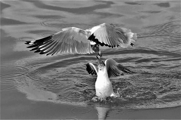 """""""大自然的瞬间""""图片展在河内举行 hinh anh 1"""