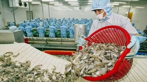 越南虾类对中国台湾的出口额攀升 hinh anh 1