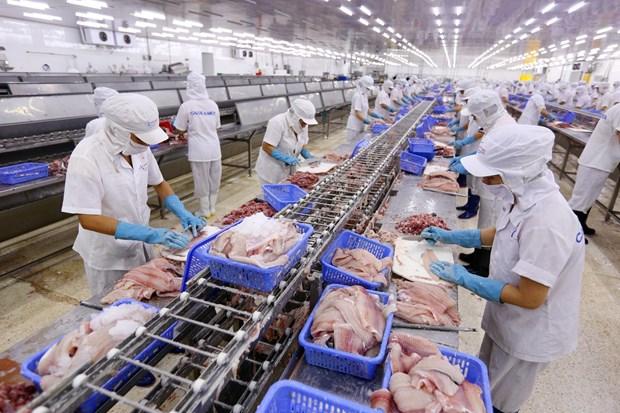 越南具备向美国出口鲶鱼资质 FSIS确认越南鲶鱼监管系统与美国等效 hinh anh 1
