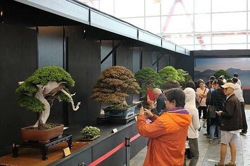第15届亚太盆栽与赏石大会在胡志明市开展 hinh anh 1