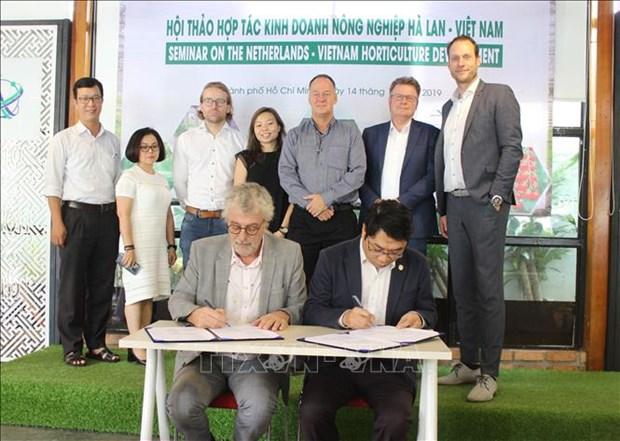 越南与荷兰促进农业领域的合作 hinh anh 1