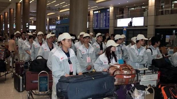 韩国是越南劳务输出的最主要市场 hinh anh 1