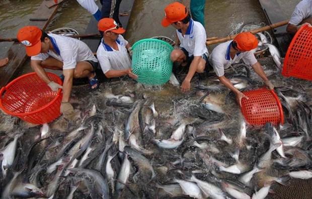 安江省农产品加大对欧洲市场出口力度的机会广阔 hinh anh 1
